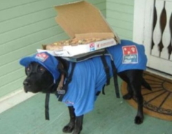 dogsdoingpplthings:  gettin the pizza 2 u in 30 minutes or ur money back guaranteed