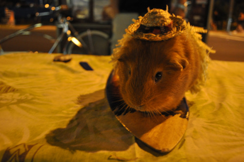 And the funniest/cutest/cruelest-thing-in-Hawaii award goes to THIS: a guinea pig in a straw hat, wearing a grass skirt and posing on a surfboard. Check out the rest of my Hawaii Photo Diary HERE.