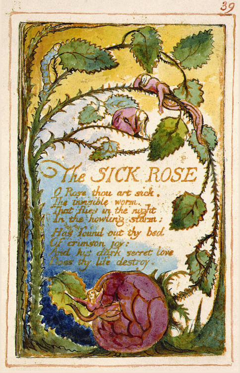 The Sick Rose Collection: Songs of Experience ~William Blake (1794)  O Rose, thou art sick! The invisible worm That flies in the night, In the howling storm,  Has found out thy bed Of crimson joy: And his dark secret love Does thy life destroy.