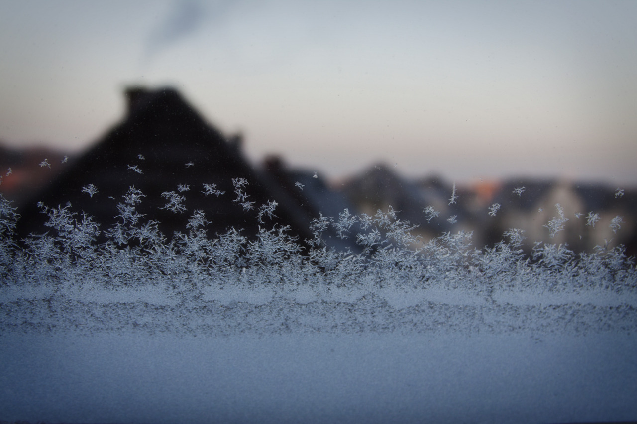 [4/52] Frozen morning