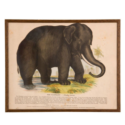 The Elephant Yours for $225.