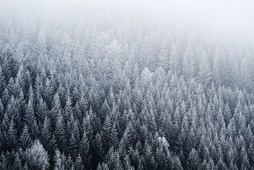 refero-mundus:  white frosted (by stephan_amm)