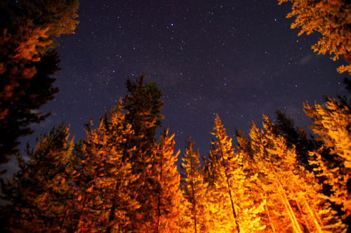 furples:  (by LawrenceMartinez)  elegant and tall trees lit by camfire point to the starred skies Blog: Scribbling on the Computer ~ Twitter ~ Pinterest ~ Goodreads ~ Tumblr: Unconscious Plots