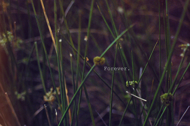 [Forever] on Flickr.