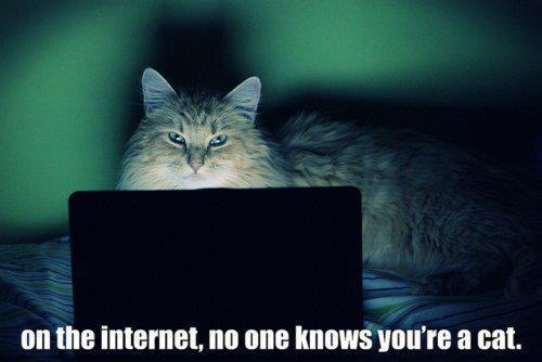 on the internet, no one knows you're a cat.