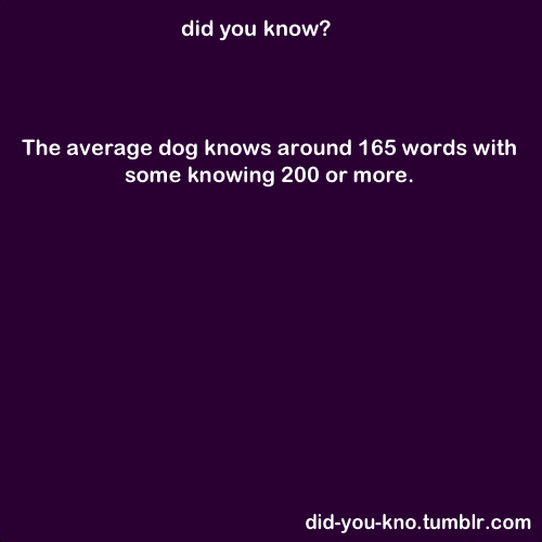 "did-you-kno:  Dogs can learn up to 165 words or so  (including gestures), and a few ""super dogs"" can learn around 200 words,  similar to the human equivalent at around 2 years. Source"