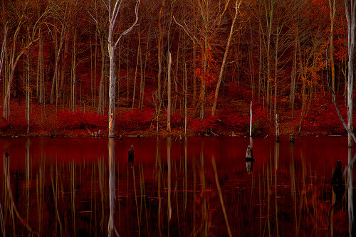 pisceo:  Autumn Firelight in the Dead Trees (by SunnyDazzled)