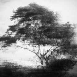 black-and-white:  soul tree | by menoevil