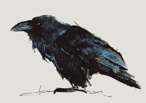 CROW NO 14 Limited Edition A5 Fine Art Glicee by clockworkchild