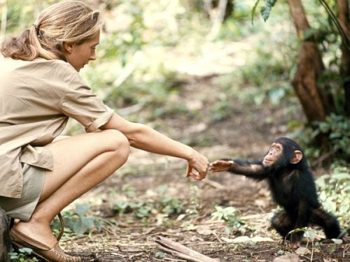 "fyearth:  Women of National Geographic | Nat Geo  ""Jane Goodall's story of a young girl who loved animals and dreamed of going to Africa and who found a way of making that dream come true—is also one of the great scientific sagas."" [more 