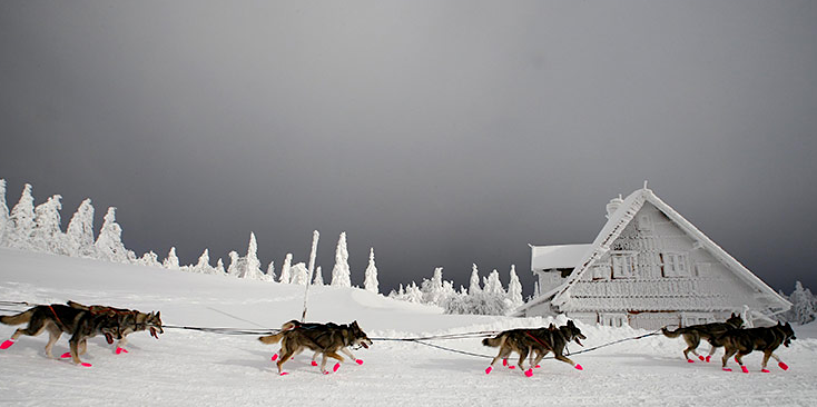 Today in  Czech Republic: Sedivackuv Long dog sled race, the hardest dog race in the world