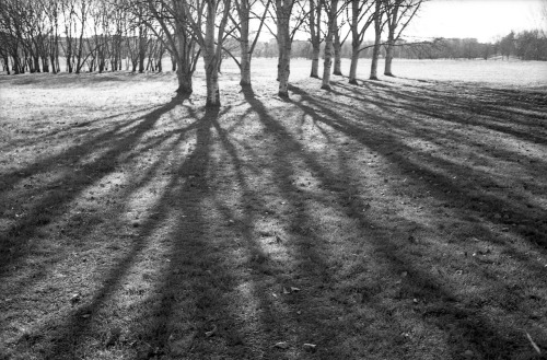 long shadows in the park