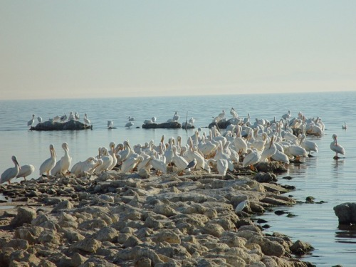 Took this photo 10 years ago this month at Salton Sea.  It will be interesting to see the changes since then when we go out on Saturday.