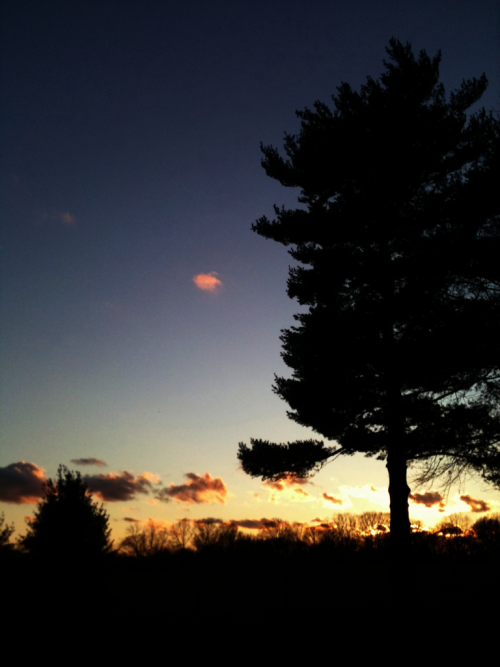 Sunset on Old Bay Farm.   1.27.12