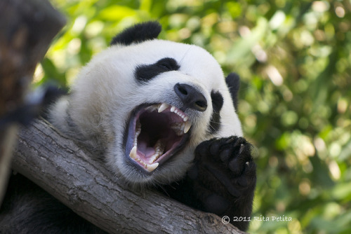 sdzoo:  Yunior says…Have a great weekend! by Rita Petita on Flickr.