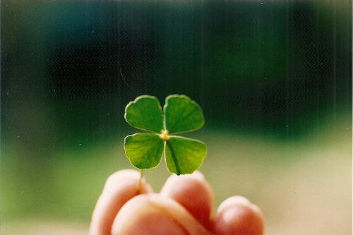 Four Leaf Clover- Good luck and be mine. The four leaves represent faith, hope, love, and luck. If you give your lover one of these that you found, you belong to each other.