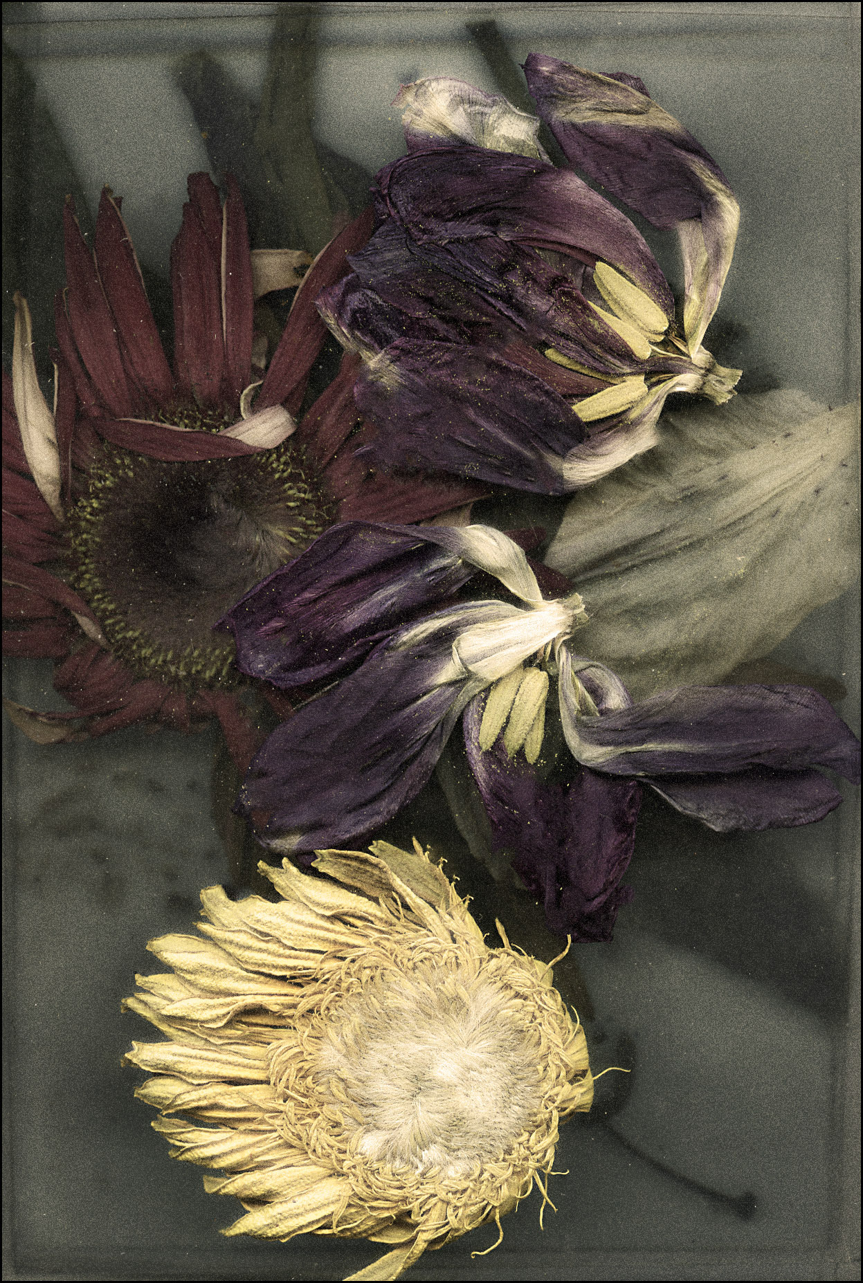 jackbarnosky:  When all the Flowers Speak Your Name                   by Jack Barnosky