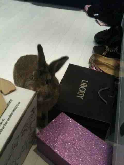 A cute picture of Basil the Bunny investigating in my room at the Annexe.