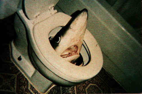 whilemattsleeps:  Dont you just hate it when you're having a poo and a shark comes along and bites your anus?