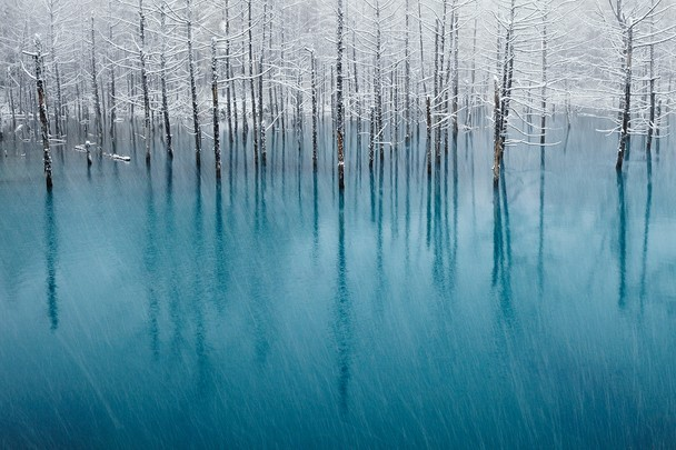 "the-iridescence:  Photo and caption by Kent Shiraishi ""The blue pond"" of the famous tourist resort, Biei, Hokkaido, Japan. This is a place where many tourists gather in spring, summer, and autumn. However, since this pond freezes in winter, nobody is during that period. This photograph is the moment first snow of the season is falling in that blue pond. We can see first snow of the season from the end of October. Why is blue? This is because the underground hot spring ingredient is gushing. This blue pond changes a color every day. I think that mystical blue and pure white snow are beautiful. All are nature's tints."