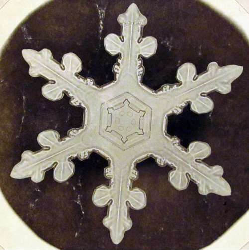 snow flake II I was looking for a photo of the largest snowflake (google doodle  today), but I found this instead from the book Snow Crystals published  in 1931 with photos took by Wilson A. Bentley. This is one of the first photos ever took of a snow flake click here for more information about him