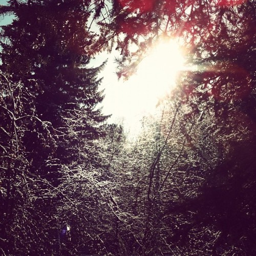 Tree love #colorado #coloradolove #sun  (Taken with instagram)