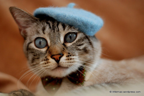 ohmydearlord, cats in hats.