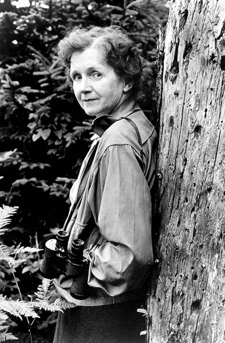 earthboundmisfit:  Rachel Carson: Marine biologist, ecologist, and environmentalist who contributed to the pioneering of the U.S. conservation movement through the publication of her book Silent Spring which resulted in the ban of the harmful synthetic pesticide DDT.  THIS beautiful woman!