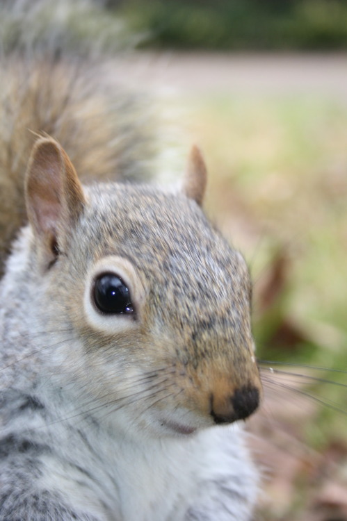 lol i love squirrels  can be your friend ?yes yes you can