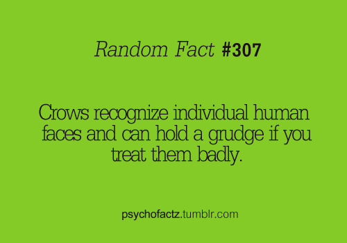 psychofactz:  More Facts on Psychofacts :)   My rm M is so afraid of birds because she once threw a snowball at a crow and then birds starting holding a grudge against her. One crow followed her 7 blocks dropping walnuts on her head.