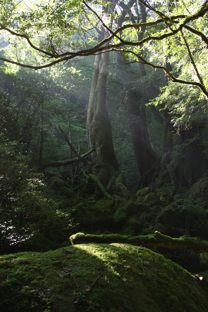 ampliflyahhhh:  Enchanting forest… <3