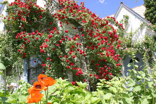 Covered in roses by thegardencottagebnb on Flickr.