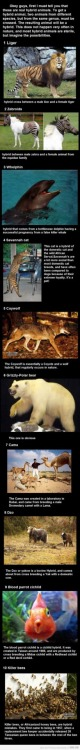 9gag:  Top 10 Hybrid Animals