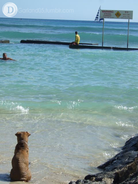 Life dog on duty.  Oahu, Hawaii 2008.