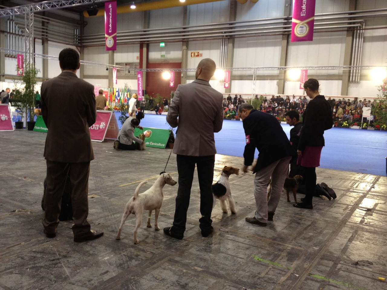 The #Porto International Dog Show My weekend was dog-filled! My Dad's Veterinary Hospital (Hospital Veterinário do Porto) was the official veterinary support for this big event in Porto. As a big animal lover, I couldn't miss the chance to accompany him and experience the backstage of the show, and get to see all the beautiful dogs! Here are a few photos from the event this weekend, in particular of the variety of breeds on show. The 'Best Dog in Show'  was won by a Portuguese Water Dog. I'm extremely lucky to have my amazing Dad as a vet. I grew up in his clinic and surrounded by animals, always with great love and respect for an animal's life. I believe this has been a really positive influence in my life, which I also see reflected in the sport I practice since I was 8, horse riding, which is of course, all about you and the horse.