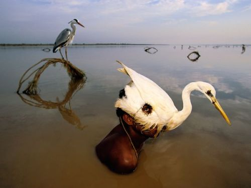 Peering from a decoy, a hunter lifts his head above the water of the Indus River. The Indus is the primary source of freshwater for most of Pakistan, a fast-growing nation of more than 170 million people. Photograph by Randy Olson, National Geographic 8 Mighty Rivers Run Dry From Overuse