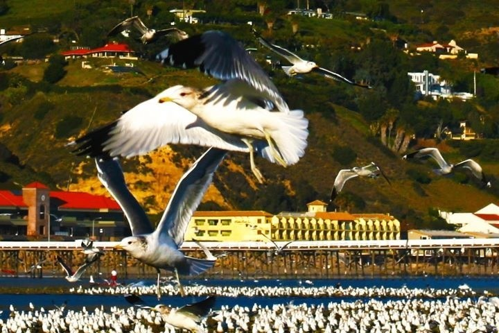 SHot of birds in Malibu