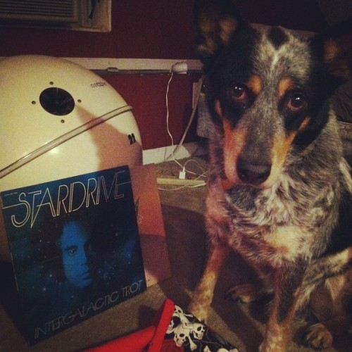 #nowplaying This dog loves some synths. #fb  (Taken with instagram)
