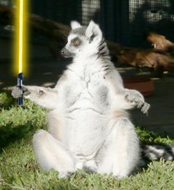 Chubby new recruit wonders how his lightsaber went yellow. Lemur 2/5 for Sylvia