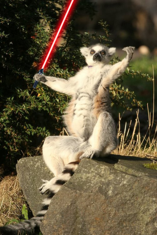 Sith Lemur feels the power of the dark side. Lemur 3/5 for Sylvia.