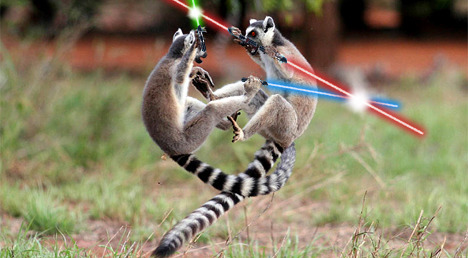 A swift Jedi lemur faces a powerful Sith lemur in fight to the death. Lemur 5/5 for Sylvia.