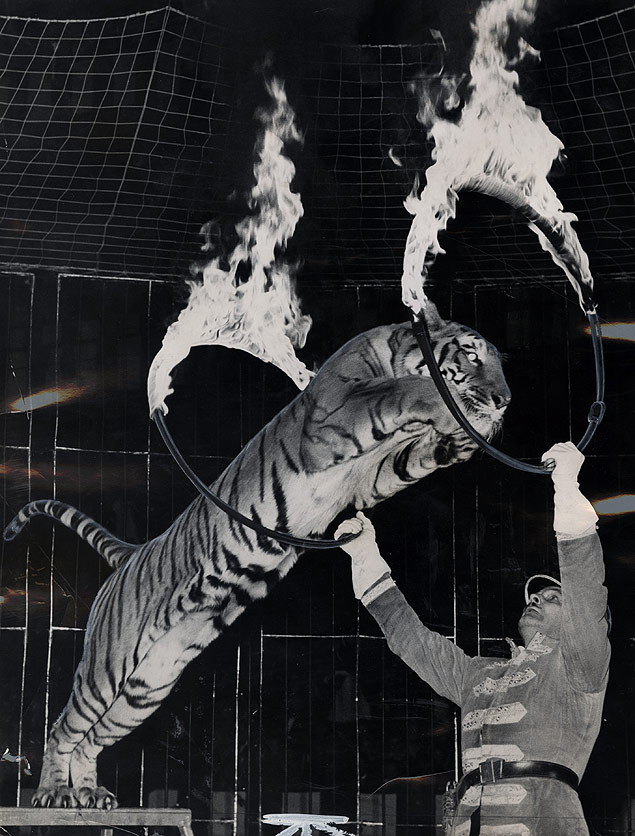 firsttimeuser:  Tiger's Leap, 1962 Circuses — Ringling Bros. Barnum and Bailey