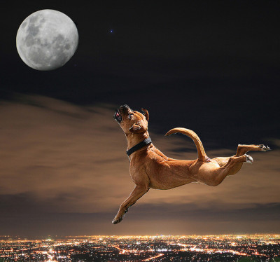 magicalnaturetour:  Reaching for the Moon by _davidh_ on Flickr. :)