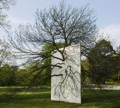 miss-mary-quite-contrary:  'Wall in Blue Ash Tree'   by Letha Wilson, 2011.