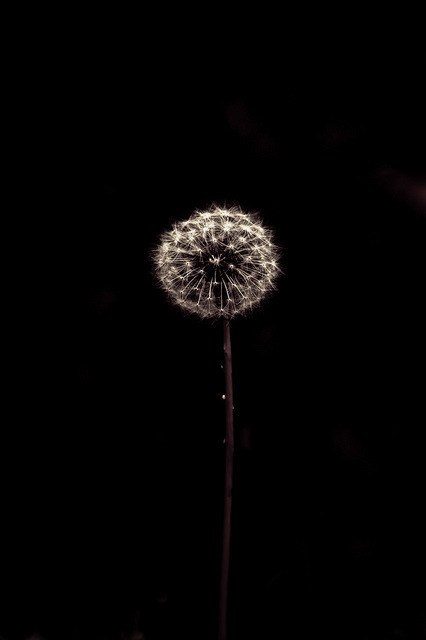 Firework flower by HYPENEKO on Flickr.