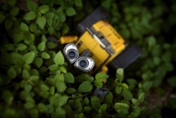 adventureswithwalle:  Relax. 30/366  Oh, little wall-e, trust me, i'd love to relax. But I just can't with all these amazing things happening around me. :D