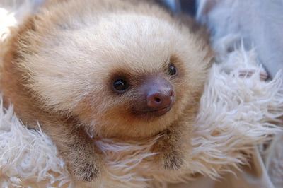 Fluffy sloth is cute.