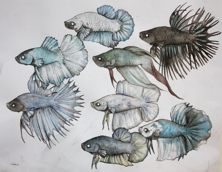 reallyepicstuff:  Betta by ~SecretlyaZombie