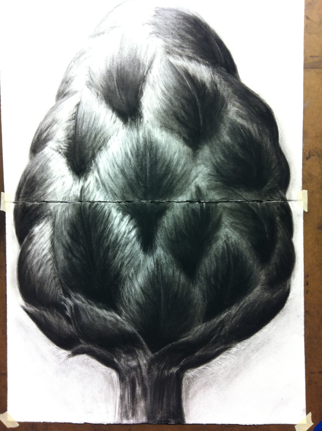 This is a charcoal piece I did in Drawing 1 last semester. Not really sure what it is, but we were told to interpret these botanical pictures. The figure this is based off was more spiky, but I changed it to a softer texture. This picture was taken from my phone so obviously it's not the best quality.