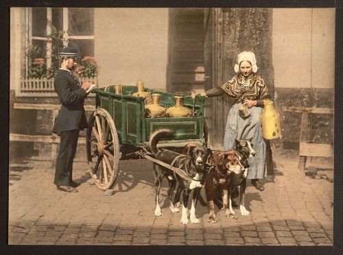 lolajambon:  Hey,   Flemish milkwoman, Antwerp, 1890.  How's your awesome job?  Love, Laura P.S. Are you getting a speeding ticket?